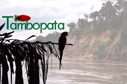 The Colpa of Tambopata